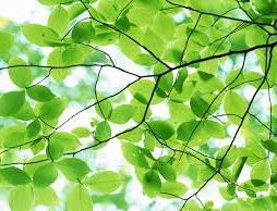 http://specialspaces.org/bark-of-a-tree-pleasant-green-leaves-desktop-backgrounds-pictures-jpg/