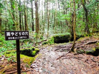 A sign in the Sea of Trees points out Amayadori no Ana, a hole in the ground that can be used as a rain shelter. Photo by Joshua Meyer.