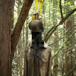 Aokigahara-Forest-hanging-or-drug-overdose