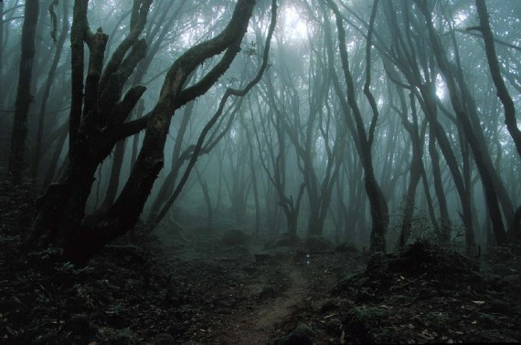 Aokigahara-Forest-strange-claustrophobic-feeling