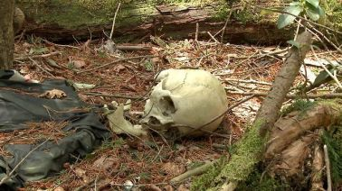 Top-10-Aokigahara-Forest-Stories-about-the-Haunted-Forest-in-Japan